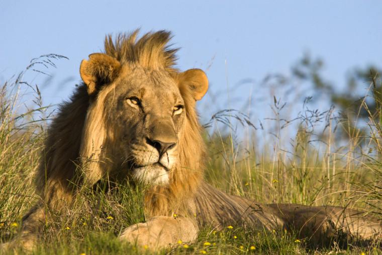 trend safari ideas inspirations from travel